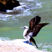 Cover Photo. Pelican on the Paracas Reserve beach in Ica, Pe