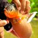 Fishing for Piranha in the Amazon jungle in Peru.