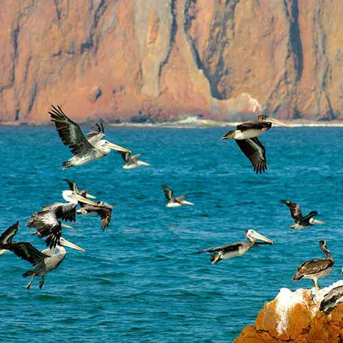 Ballestas Islands and Paracas Reserve (Full Day)