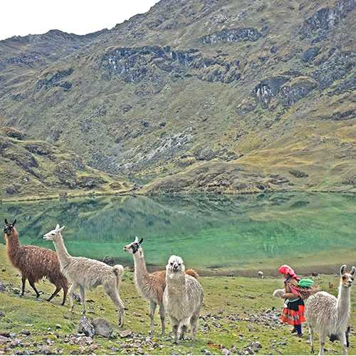 Lares Valley and Machu Picchu